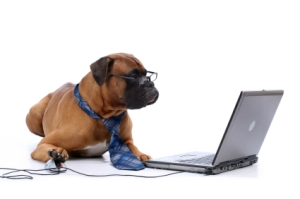 dog_working