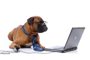 dog_working